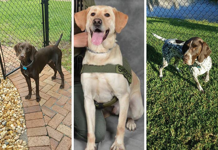 Finn, Packer, and Primus of the Broward County Sheriff's Office