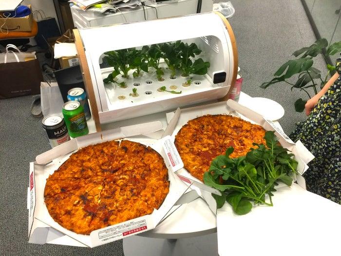 具材はルッコラがたっぷりあるので、ピザはチーズだけしか乗っていない素のピザを注文。これだけで普通に美味しいし、安いし、「素ピザ」おすすめです。まだ平日の16時前ですが、ビールとともにがんがんピザを食べちゃいます。