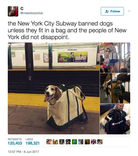Pictures That Prove Dogs Are Just Meant To Be Carried Not Walked - Nyc subway bans dogs unless fit bag new yorkers reacted