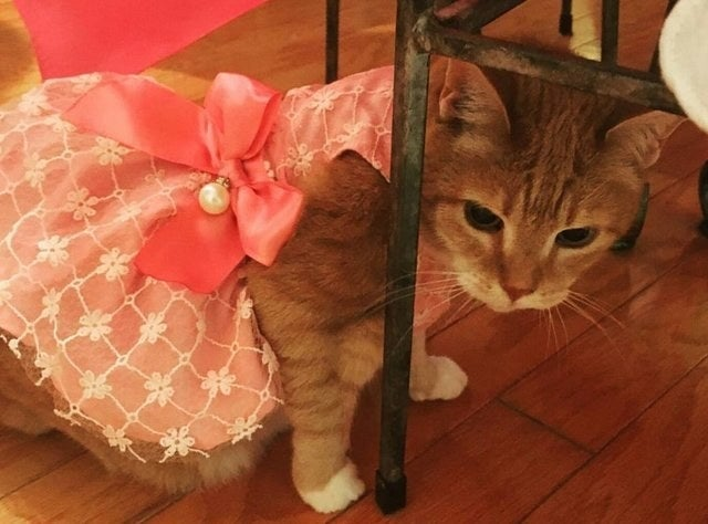 A quinceañera is a Latino tradition that celebrates a girl's coming of age. A girl's 15th birthday marks her transition from childhood to maturity so everyone gets together and throws a big party to celebrate! Luna included.