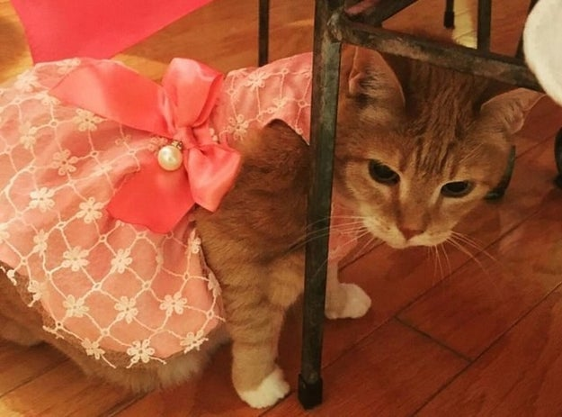 Luna just celebrated her 15th birthday (get it, girl!) so her family threw her an extravagant quinceañera.