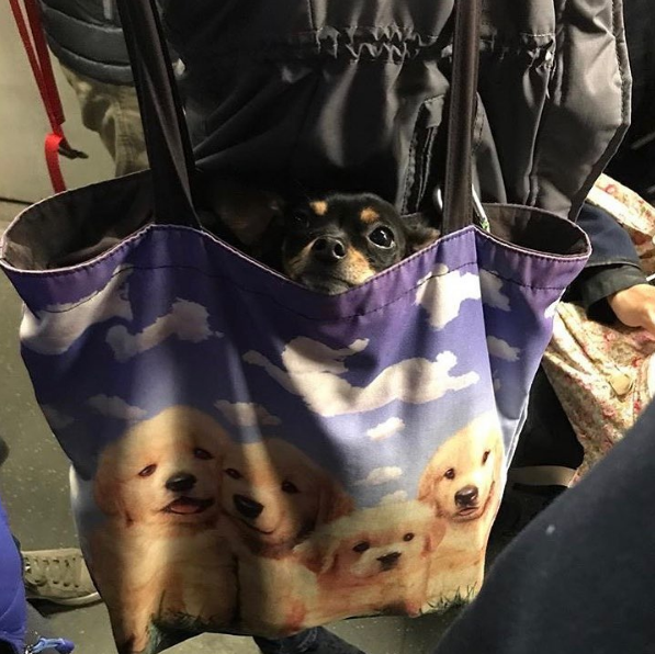 Some dogs in bags are carried around in bags decorated with pictures of other dogs...