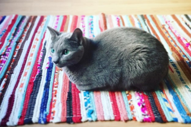 14 Cats Who Are Legit Prettier Than You