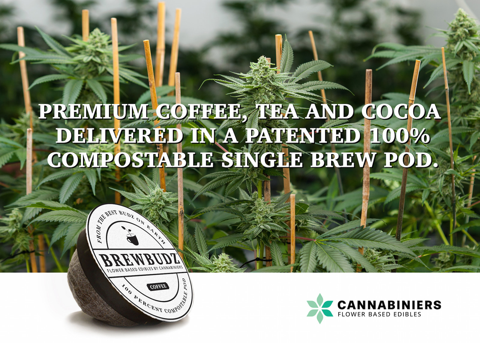 These Marijuana Coffee Pods Will Get You High AF
