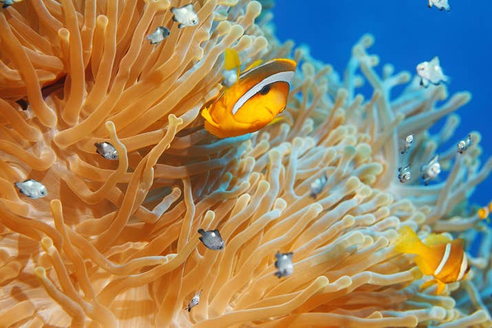 Why you should care that coral reefs are dying coral reefs are home to many different types of fish sharks turtles and other beloved marine life many of whom live and depend upon coral reefs to publicscrutiny Images