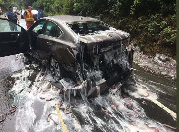 Something unusual happened on Thursday in Oregon. A truck full of slithering, slimey fish overturned on the highway.