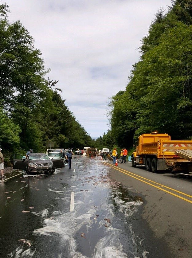 The truck carrying the creatures crashed on US Route 101 after the driver, 59-year-old Salvatore Tragale, was unable to stop in time for construction work, the Oregon State Police said in a statement to BuzzFeed News.