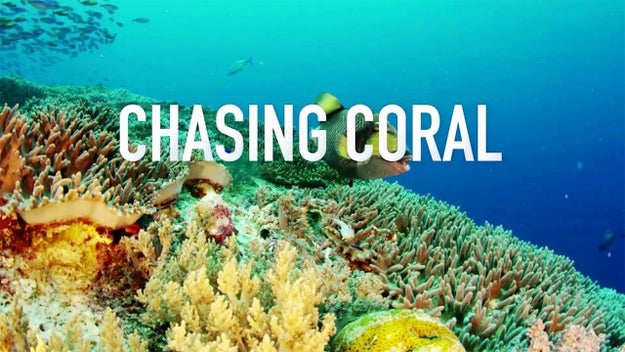 Earlier this week I got the chance to see Chasing Coral — which is out now in select theaters and on Netflix as of today — and it left me shocked, unsettled, and upset about the current status of our oceans.