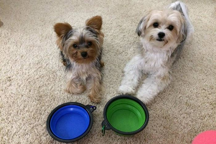 """Promising Review: """"Very durable, and lightweight. I use mine for my support dog because she goes with me everywhere in the Texas heat, and these help me give her water from water fountains."""" —Amazon CustomerGet a two-pack from Amazon for $5.99."""
