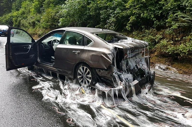 A Truck Full Of Slime Eels Spilled Into The Highway And It Was The Stuff Of Nightmares