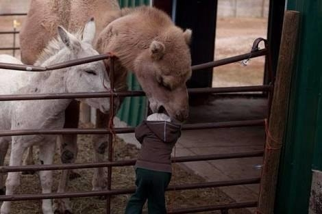 And this kid is probably done with petting zoos for life: