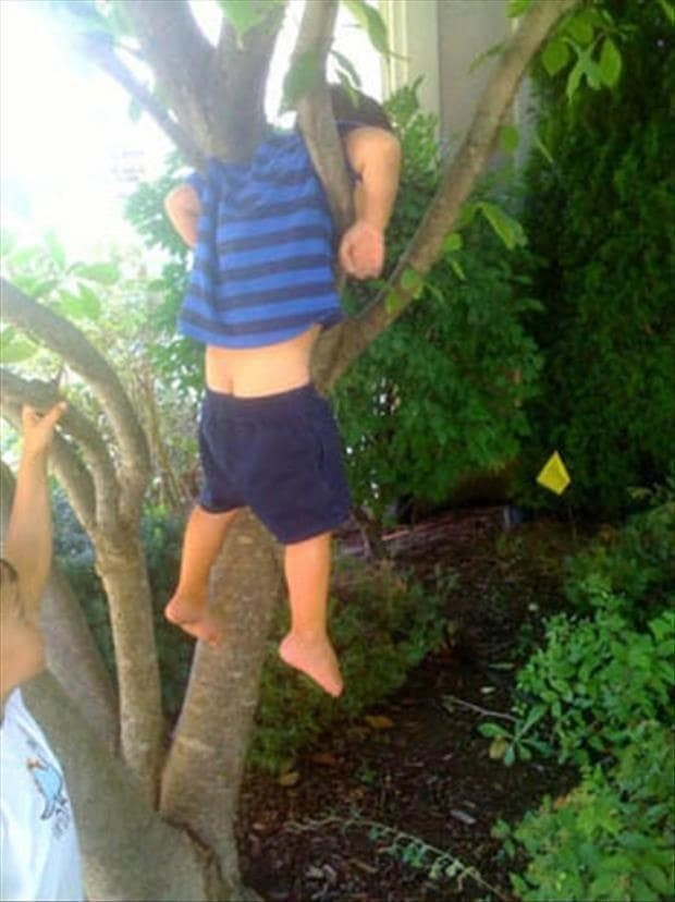 This tree-hugger, who got most unfortunately stuck: