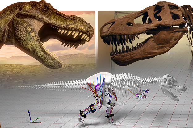 T. Rex Couldn't Actually Run, According To This Study