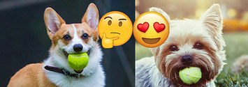 What Dog Breed Matches Your Personality?
