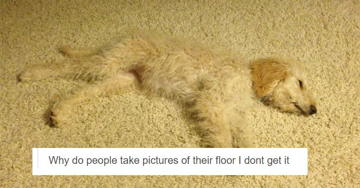17 Posts About Dogs That Are As Funny As They Are Adorable
