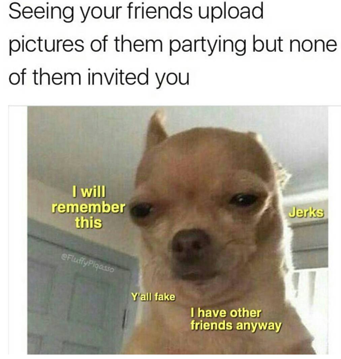 chihuahua meme face 19 chihuahua memes that are weirdly relatable 2862
