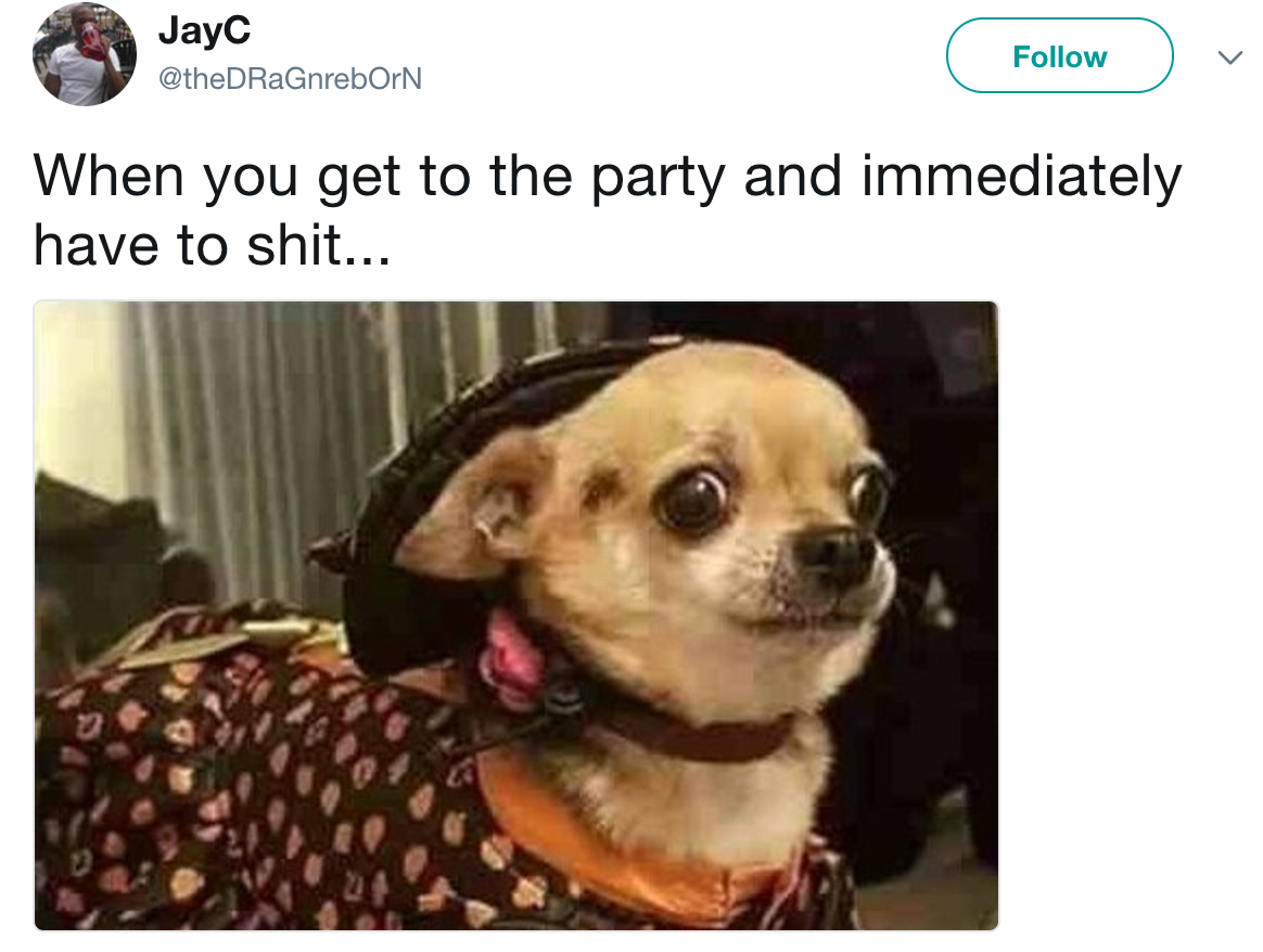 sub buzz 13687 1500533003 1?downsize=715 *&output format=auto&output quality=auto 19 chihuahua memes that are weirdly relatable