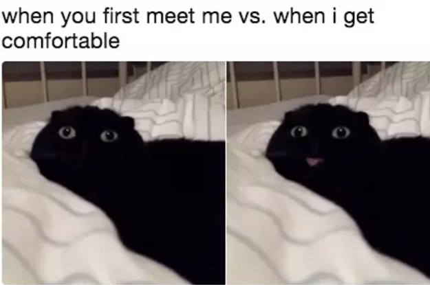 Memes You And Your Cat Will Definitely Laugh At - 17 memes youd definitely send your dog if you could