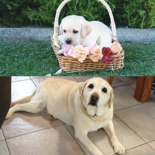 """Tara — 8 weeks old to 14 years."" — biancas4e6957548"