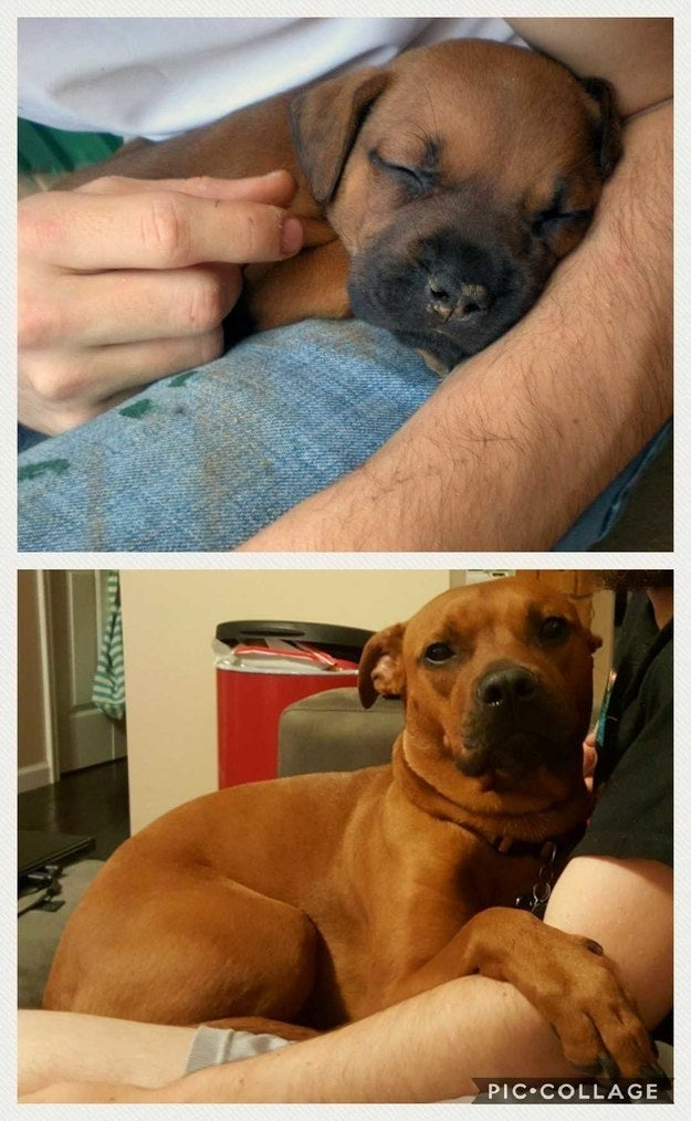 """""""Scoots at about 8 weeks and 5 years."""" — EffingA16"""