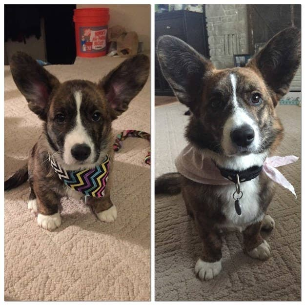 """Saidie Bear: She grew into her big ears!"" — karinagolightly"