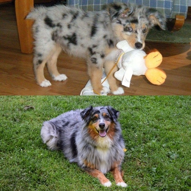 """Bo the day we brought him home, and Bo 8 years later."" — kaceyt4515a4b77"