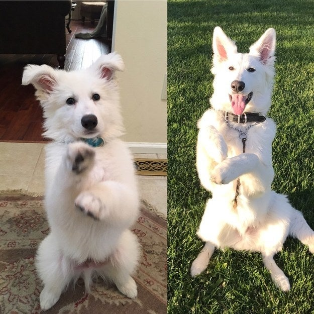 """""""Ghost: sitting pretty from 9 weeks old to now."""" — maggiew4a1bbf204"""