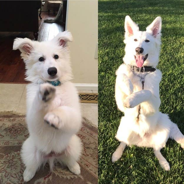 """Ghost: sitting pretty from 9 weeks old to now."" — maggiew4a1bbf204"
