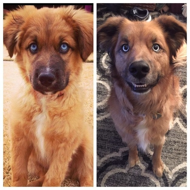 """""""Yogi, the yoga master. At 6 months (left) and 5 years (right)."""" — sarahg48f84b5a6"""