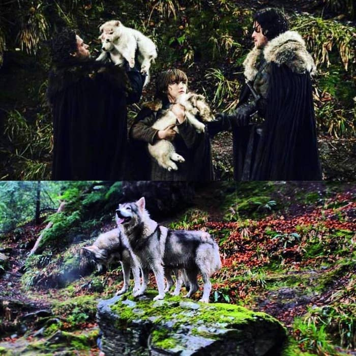 "Odin and Thor as puppies with Robb Stark, Bran Stark and Jon Snow in episode 1 ""Winter is Coming"""