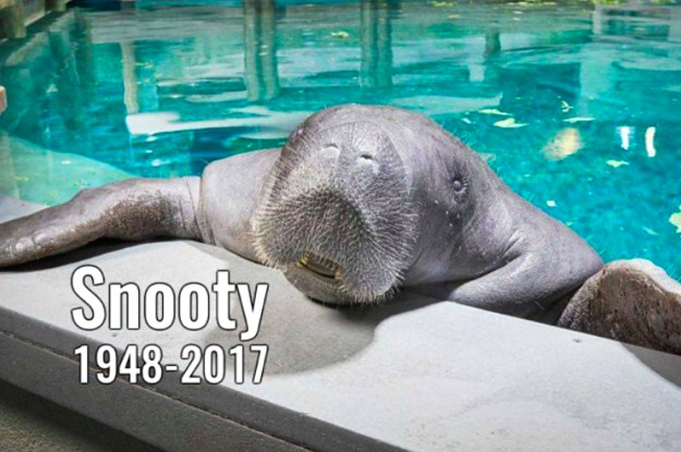 People Are Petitioning For A Confederate Statue To Be Replaced With One Of Snooty The Manatee