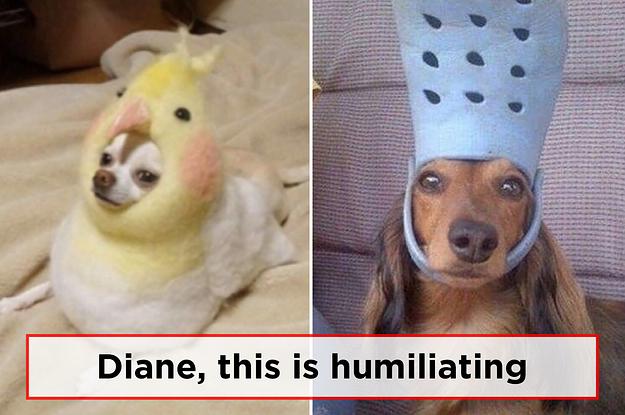 Just 33 Hilarious Dog Memes