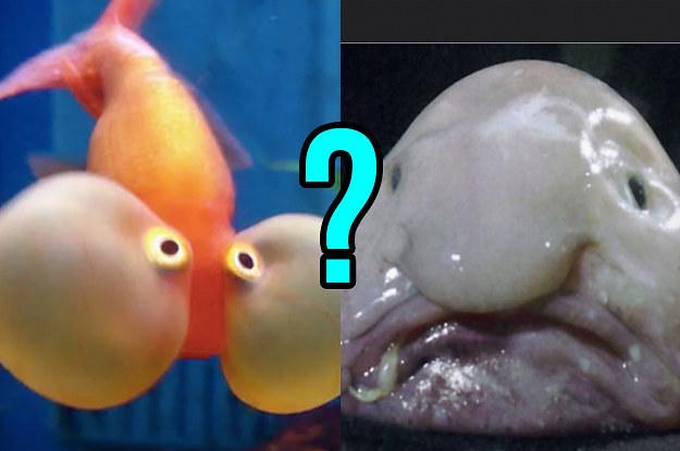 Weird Fish Names 2