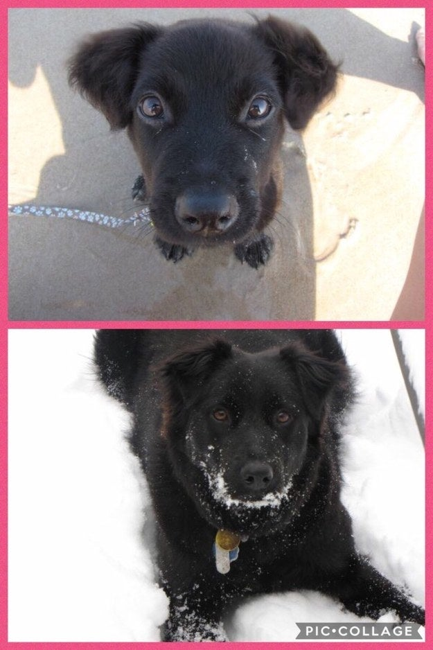 """""""James from 12 weeks to 7 years (peep those puppy ears that didn't grow with him)."""" — BrookeEleanore"""
