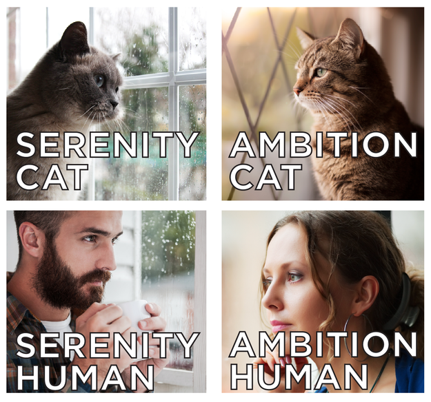 Where do you fall on the ambition-serenity-cat-human grid? Answer the questions below to find out.