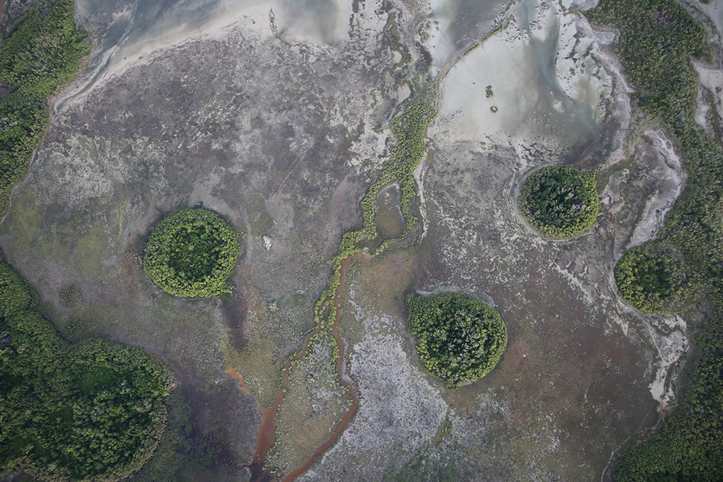 """Pockets of springs rising out across the salt flats of Arnhem Land."""