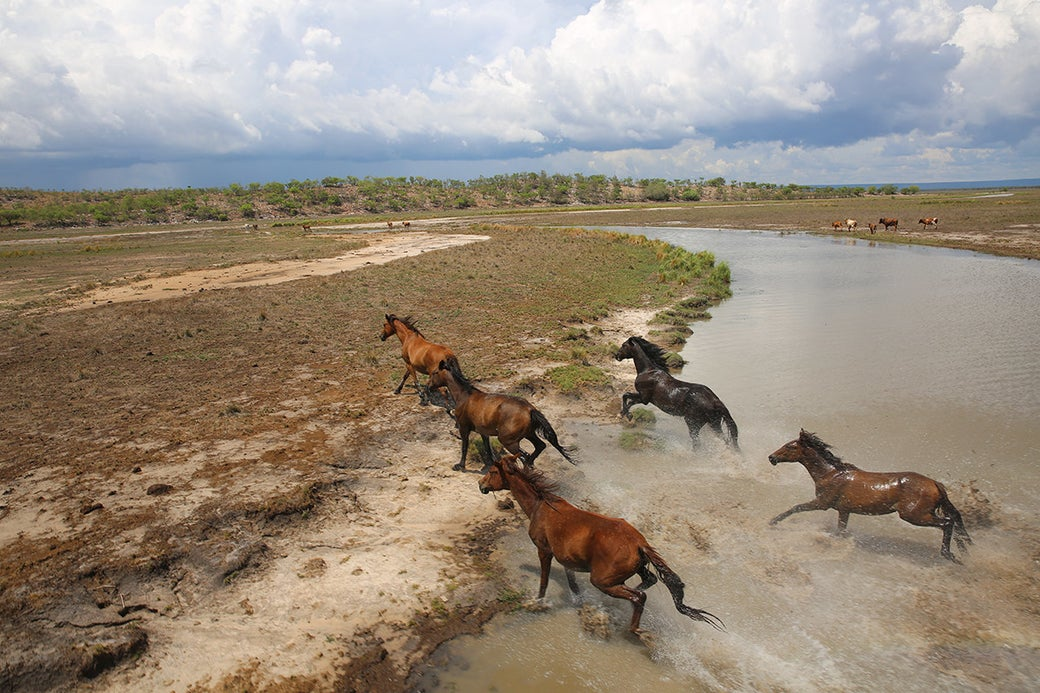 """""""Here's another photo of horses running freely in the wild."""""""