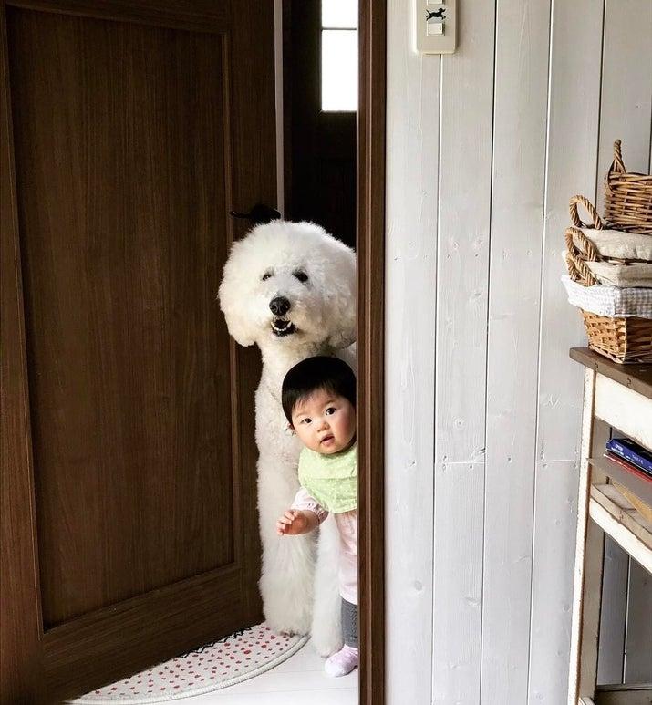 隙間から覗く犬と赤ちゃん