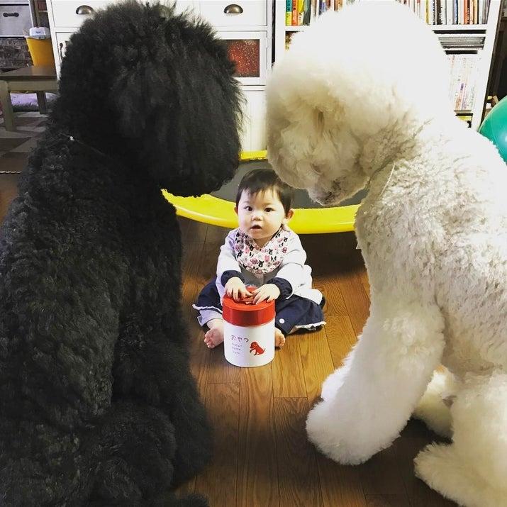 圧のすごい犬と赤ちゃん