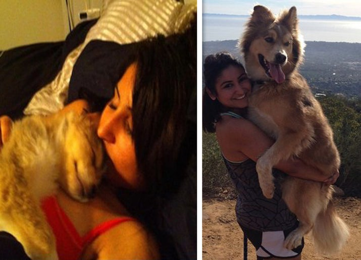 """""""This is my best buddy, Bear. I adopted him at 6 weeks old while in college and 7 years later we're still inseparable. He's gone from a little teddy bear to a cuddle monster."""" — cag263"""