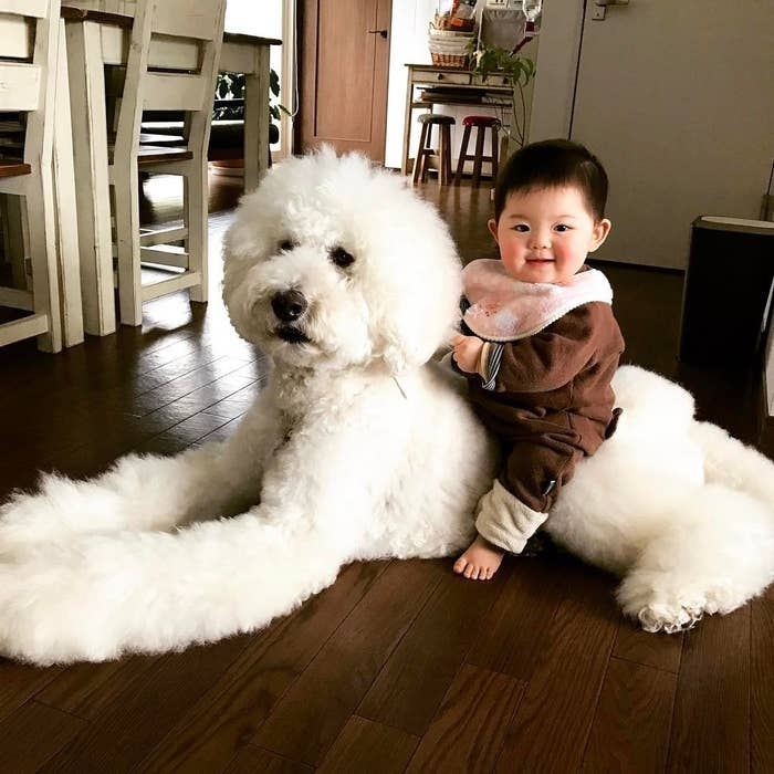Baby And Giant Dog S Friendship Proves