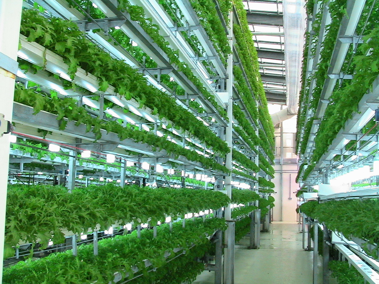 Выращивание зелени в теплице зимой: секреты для 68