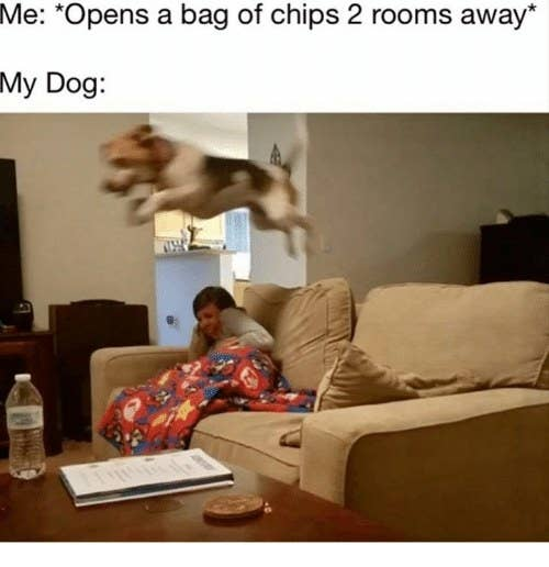 Memes Your Dog Would Definitely Laugh At If They Could ReadLaugh - 17 memes youd definitely send your dog if you could