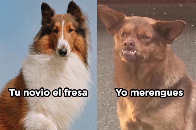 20 memes que prueban que el perro chilaquil se ro 2 19272 1499382894 2_dblbig 20 memes que prueban que el perro chilaquil se robó nuestros corazones