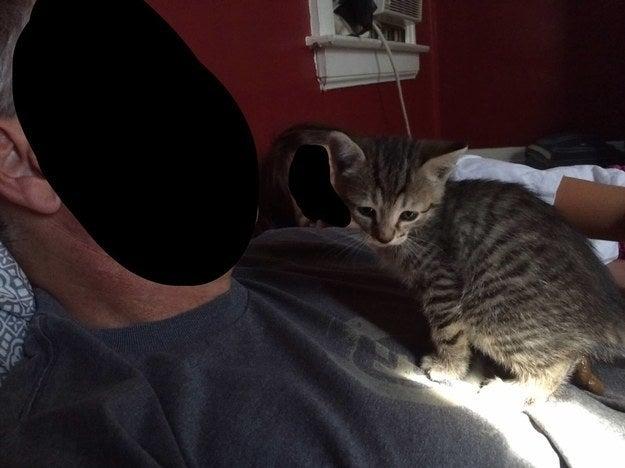 """""""Se vocês olharem para o gato, verão que ele está fazendo cocô, e eu só notei isso depois de tirar a foto."""" – mangoandmoe"""