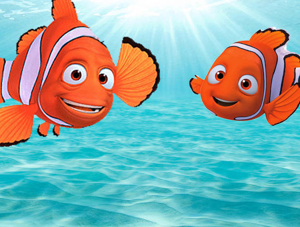 """The Truth Behind """"Finding Nemo"""" Is Really Going To Mess ..."""