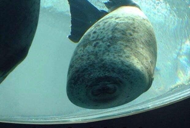 """""""Isso é o que acontece quando uma foca dá de cara no vidro."""" – SirGrimes, Reddit"""