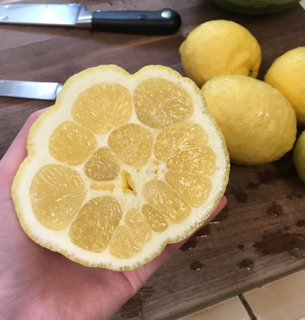 What's wrong with this lemon???