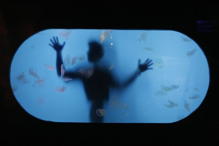 A marine biologist at the Melbourne Aquarium in 2008.