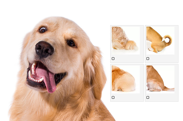 Can You Match The Dog End To The Dog Beginning?